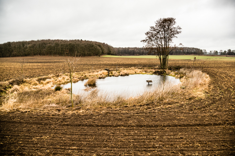 Badesee für grünfüßige Teichhühner. Einer von vielen Tümpeln, die Dierk Engel rund um Fincken gestaltet hat / © FrontRowSociety.net, Foto: Georg Berg