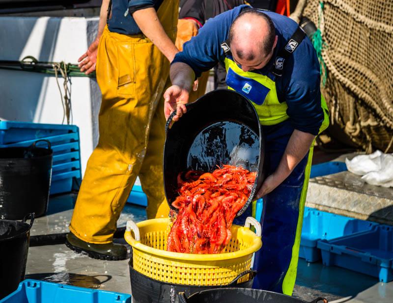 Tiefrot sind diese Gambas, die nun auf dem direkten Weg vom Trawler in die Auktion gehen. Sie werden im 2.000 Meter tiefen Canyon direkt vor Palamós gefischt / © FrontRowSociety.net, Foto: Georg Berg