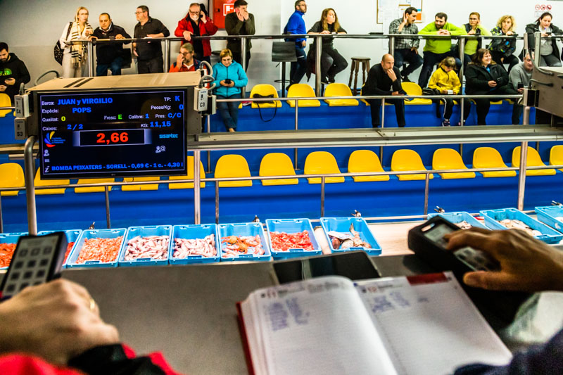 Der Tagesfang des Trawlers Punta Aire geht in die heiße Verkaufsphase / © FrontRowSociety.net, Foto: Georg Berg