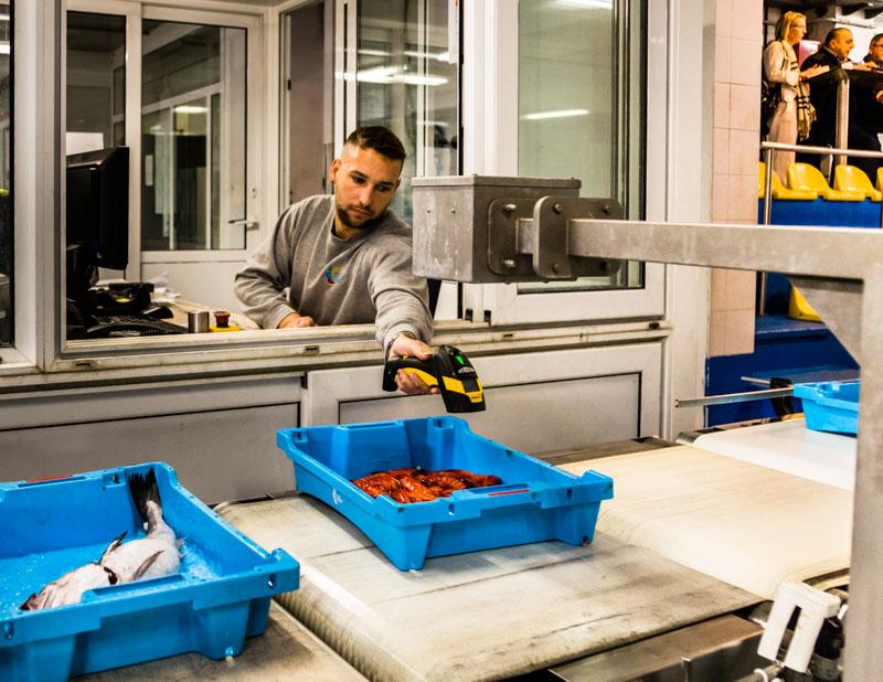 Der Auktionator an seinem Arbeitsplatz: wiegen, scannen, Preis festlegen und los geht die Auktion der fallenden Preise / © FrontRowSociety.net, Foto: Georg Berg