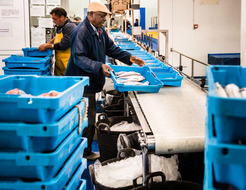 Ab auf das Band. Die Kiste ist mit den Namen des Fischerbootes und der Angabe der Fischsorte und des Fanggebietes ausgezeichnet / © FrontRowSociety.net, Foto: Georg Berg
