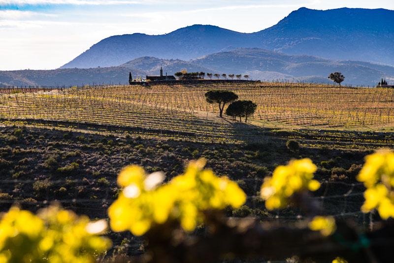 Der Wein, die Sierra und das Meer. Im Naturschutzgebiet Cap de Creus liegen drei Weingüter. Martin Faixó bewirtschaftet hier 13 Hektar mit teils endemischen Reben wie dem Picapoll / © FrontRowSociety.net, Foto: Georg Berg