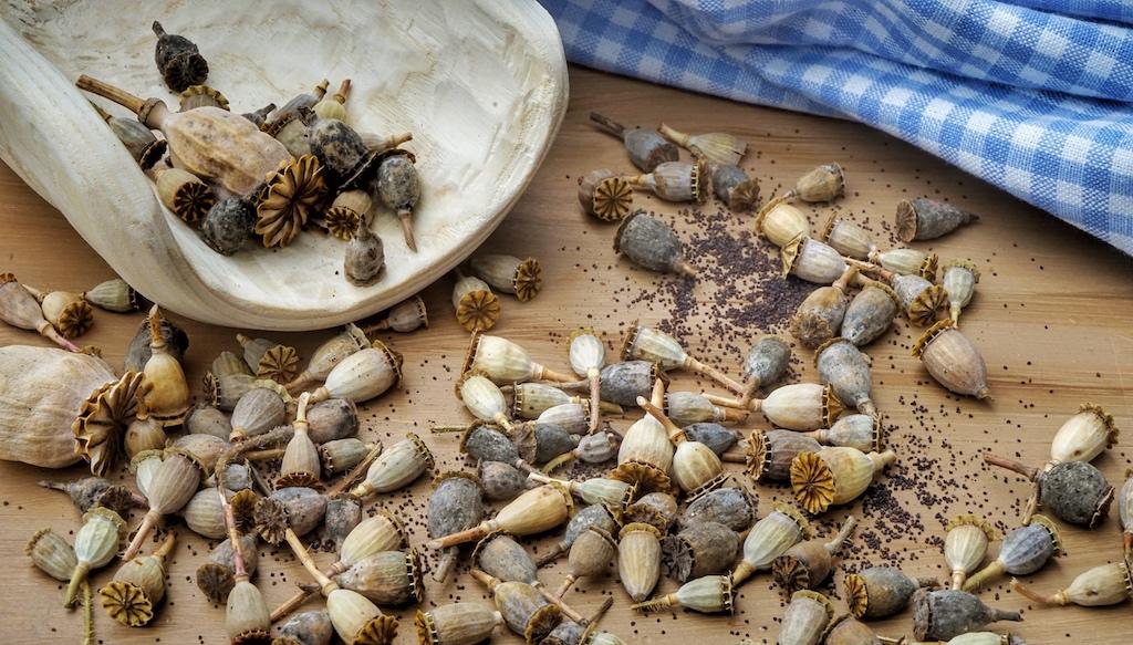 Kräuter, aber auch Samen sind in der Sterneküche gefragt