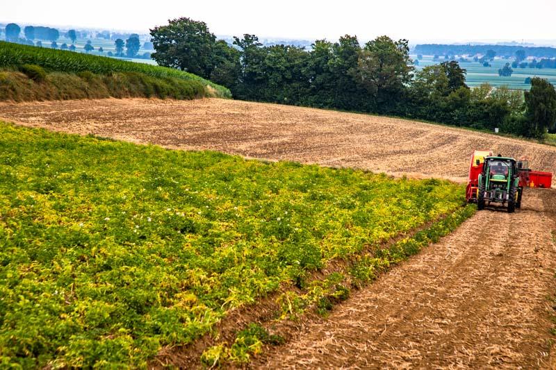 Durch die Tallage und angrenzendem Wald sind die Kartoffelfelder von Paul Strixner gut vor späten Frösten geschützt. So ist es möglich, die Mutterkartoffeln im Februar zu legen und mit der Ernte der Frühkartoffeln ab Juni zu beginnen / © FrontRowSociety.net, Foto: Georg Berg