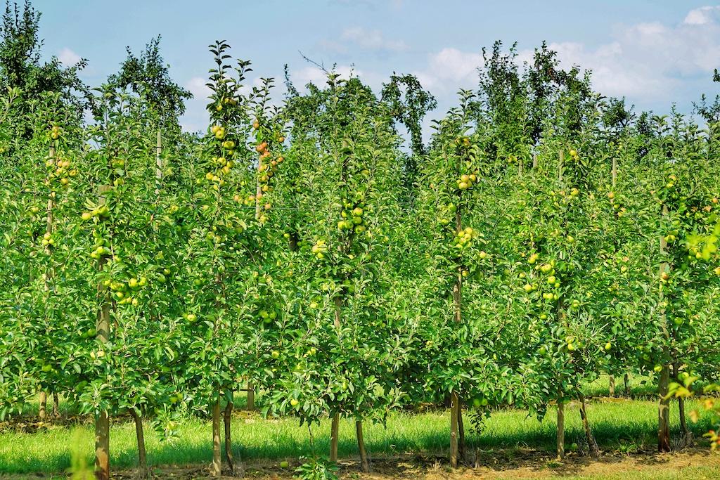 Neben den Kräutern und Gemüsen sind auf dem Anwesen Ottilie ..