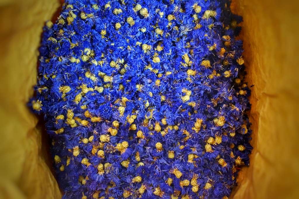 Die intensive Farbe der Kornblütler ist wirklich einmalig
