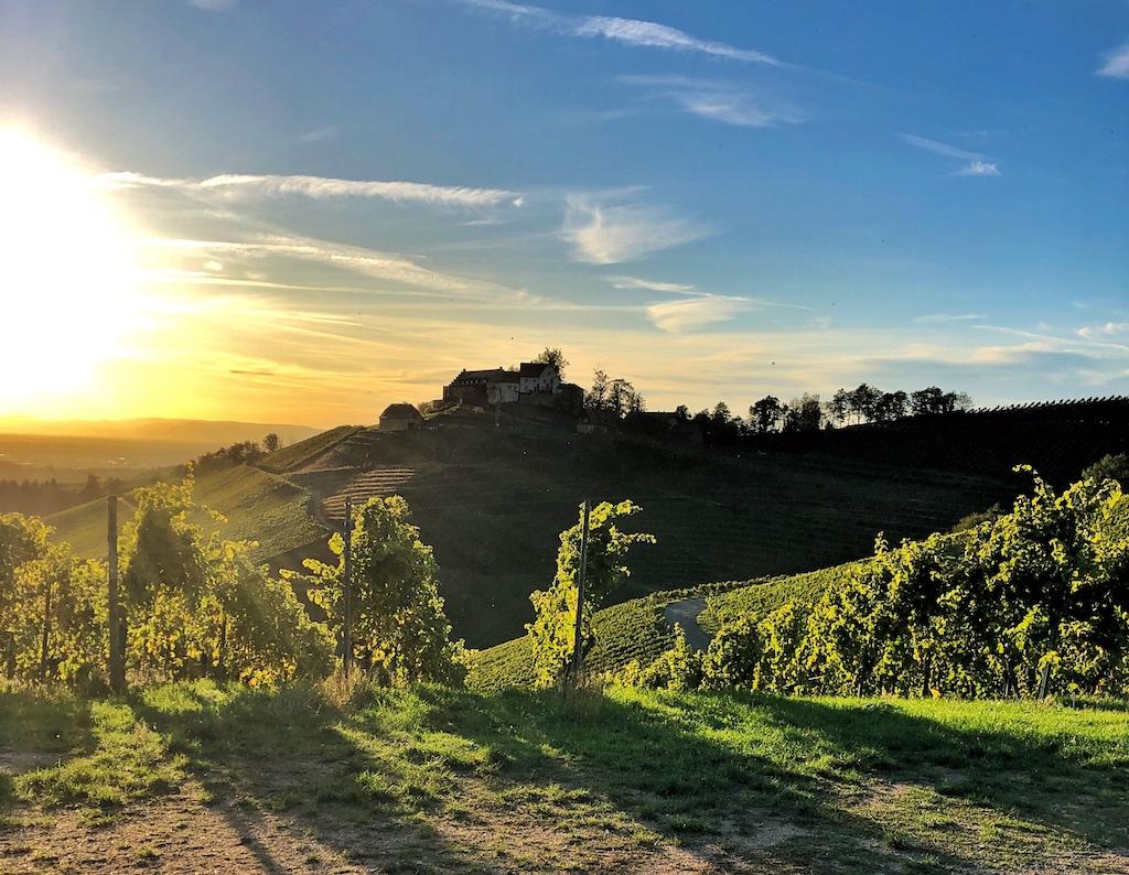 Weinwanderung über den Klingenberg (Klingenberger Riesling 1782) mit Blick auf das Schloss Staufenberg