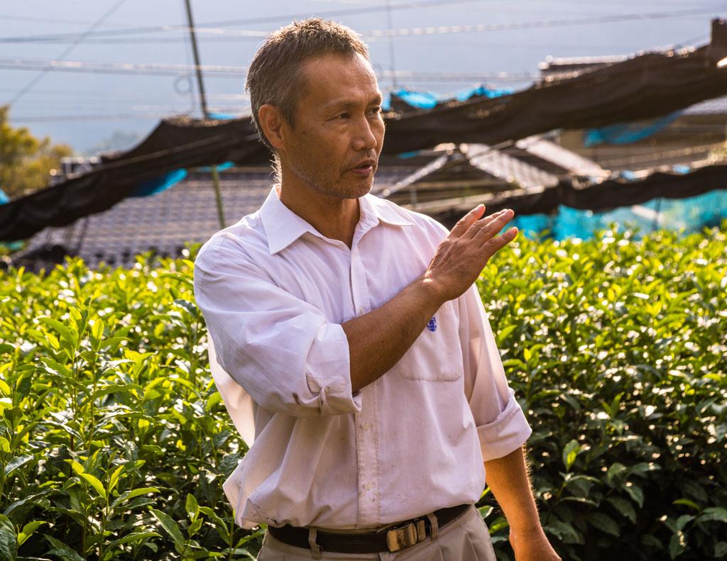 Herr Uchino auf den Teefeldern an seiner Farm. Je nach Wetterlage zieht er Netze über die Teepflanzen. So kann er das Aroma seiner Ernte beeinflussen. Weniger Sonneneinstrahlung bedeutet weniger Bitterkeit und Adstringens / © FrontRowSociety.net, Foto: Georg Berg