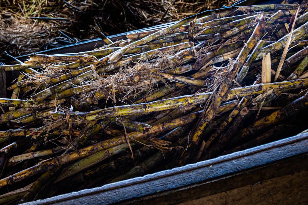 Zuckerrohr wird auf Grenada das ganze Jahr über geerntet / © FrontRowSociety.net, Foto: Georg Berg