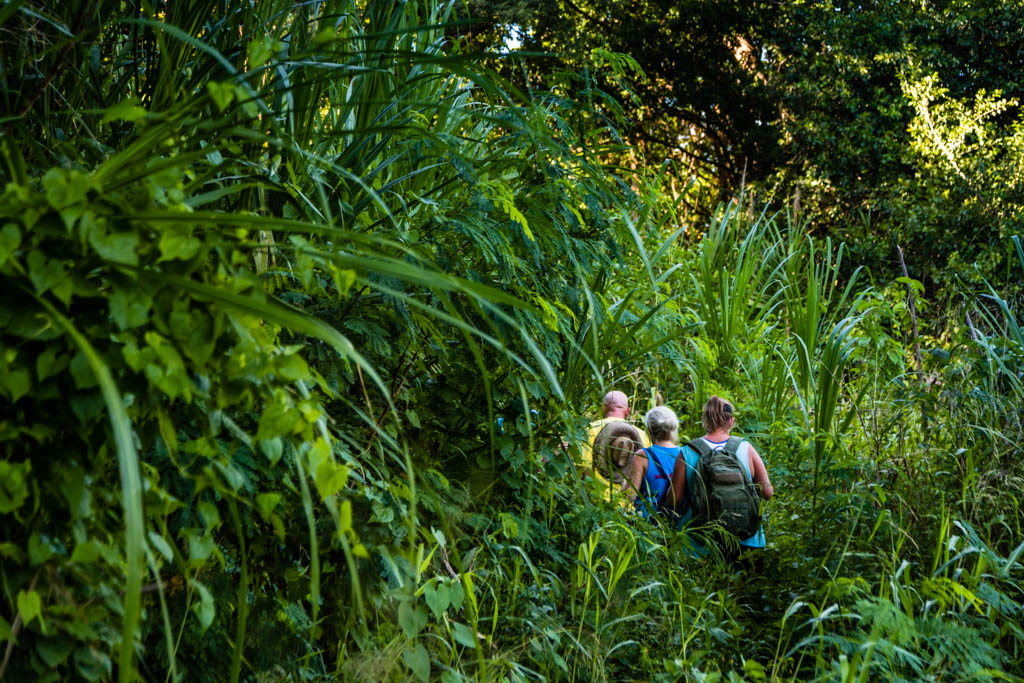 On-on. Die Markierungen des richtigen Trails sind in der üppigen Vegetation nicht immer leicht zu finden / © FrontRowSociety.net, Foto: Georg Berg