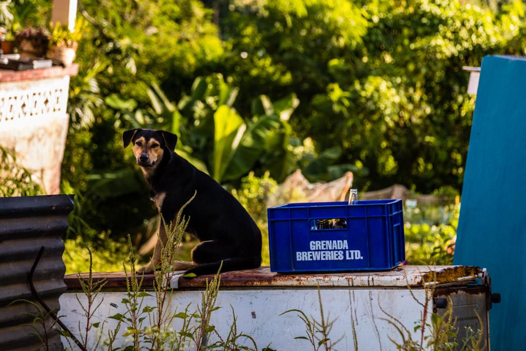 Ungeklärt bleibt, ob der Bierkasten schon bewacht war, als ihn die ersten Hasher zu Gesicht bekamen / © FrontRowSociety.net, Foto: Georg Berg