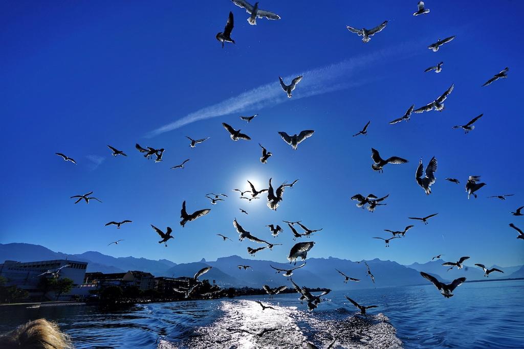 Möwen verfolgen das Fischerboot ... denn sie wissen, es fällt immer mal ein Happen ab