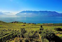 Weinterrassen des Lavaux mit Blick auf den Genfersee