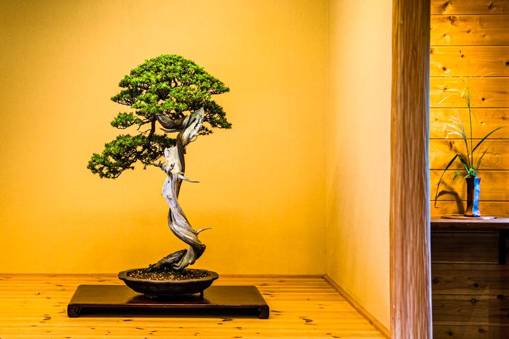 """Der Schriftsteller Peter Rosei schreibt in seinen Reisenotizen, """"Die Japaner haben unübersehbar einen Hang zu übersichtlich eingerichteten, ja gezähmten Welten."""" Im Alkoven eines traditionellen Hauses wird mit viel Bedacht nur eine Vase, eine Blume oder ein Bonsai präsentiert / © FrontRowSociety.net, Foto: Georg Berg"""
