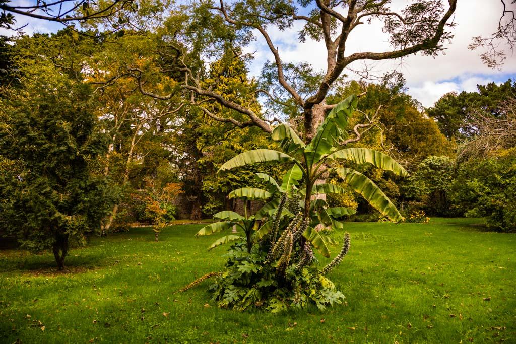 Im Garten des Hotel Dunloe braucht man eine Stunde, um botanisch um die ganze Welt zu reisen / © FrontRowSociety.net, Foto: Georg Berg