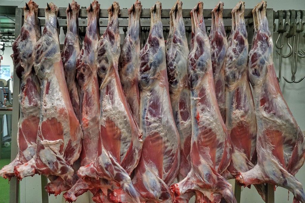 Nach dem Schlachten kommt das Schaffleisch in der Kühlkammer und wird erst nach der sogenannten Reifung zerlegt