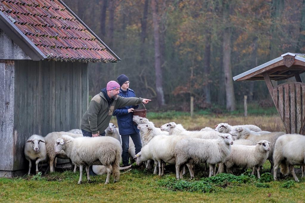 Im Hauptberuf ist Markus Lanfer (li.) Heilerziehungspfleger - seine Schafe geben ihm viel zurück. Redakteur Noris Conrad (re.) hat den Züchter besucht