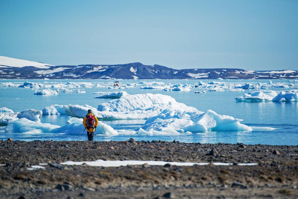 Einsamer arktischer Strandwanderer vor einem Treibeisfeld auf der Insel Severnaja Zemlja
