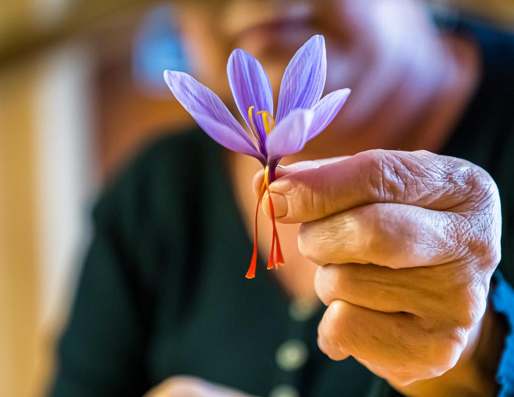 Sorgfältig werden die drei roten Safran-Fäden vom wertlosen Teil der Blüte getrennt / © FrontRowSociety.net, Foto: Georg Berg