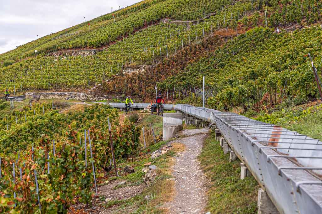 Ein Rebwanderweg mit Gegenverkehr. Der Ehrenkodex, der auch beinhaltet nur auf ausgewiesenen Velo-Wegen zu fahren, wird nicht immer befolgt / © FrontRowSociety.net, Foto: Georg Berg
