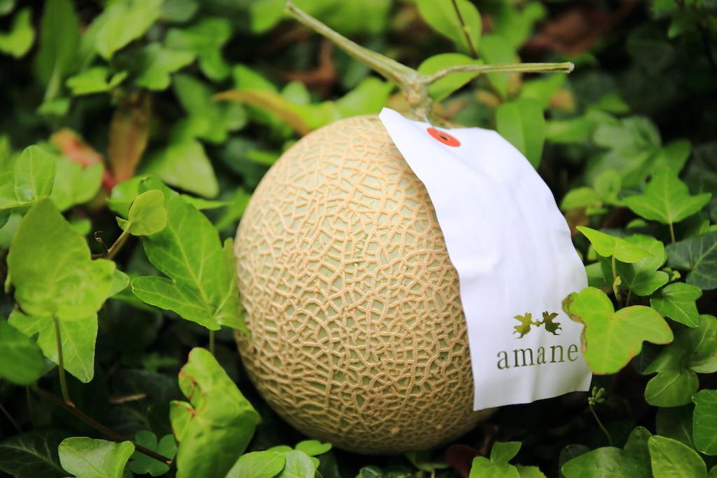 """Mit der vollreifen Zuckermelone """"AMANE"""" aus der Präfektur Shizuoka"""