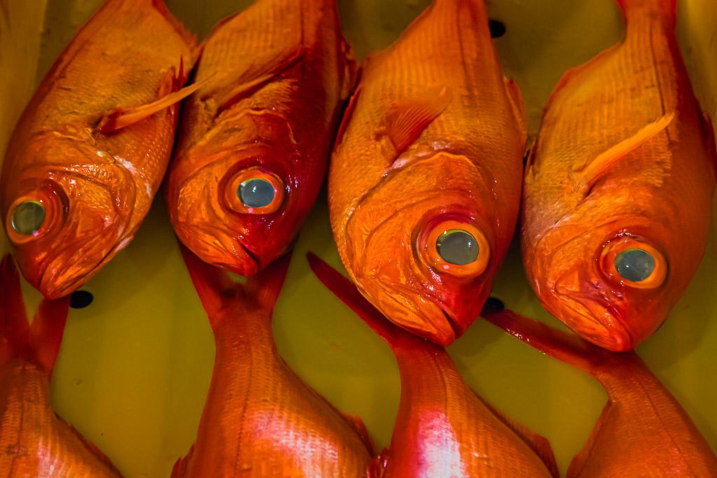 """Frischer Fisch und Meeresfrüchte sind wichtiger Bestandteil sowohl der japanischen als auch der peruanischen Küche. Hier der """"Kinmedai"""", ein roter Speisefisch mit sehr großen Augen, auf einer Fischauktion in Shizuoka, Japan / © FrontRowSociety.net, Foto: Georg Berg"""