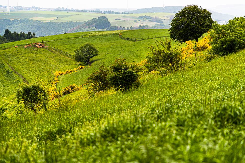 Auf dem Escapardenne Trail gewinnt man immer wieder Höhe und wird mit Blicken in die Landschaft belohnt / © FrontRowSociety.net, Foto: Georg Berg