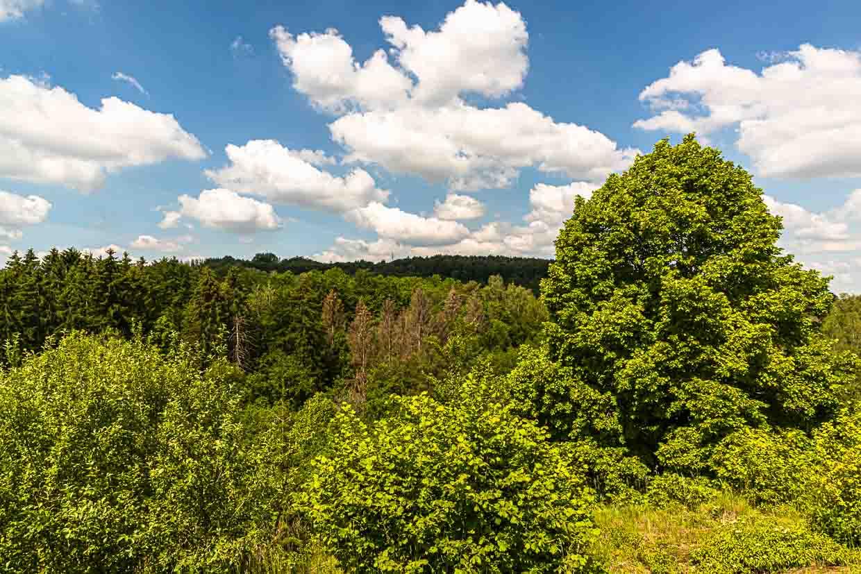 Gelungene Rückeroberung durch die Natur. Auch das gibt es entlang des Minett-Trails. Aussichten in weite Waldflächen / © FrontRowSociety.net, Foto: Georg Berg