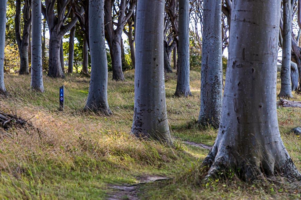 Der Wald Travens Vänge liegt direkt an der Steilküste. Vor hieraus hat man einen guten Blick nach Fünen / © FrontRowSociety.net, Foto: Georg Berg